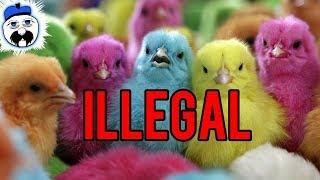 15 Most Bizarre Animal Laws You Won
