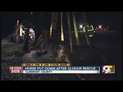 Horse put down after 12-hour rescue