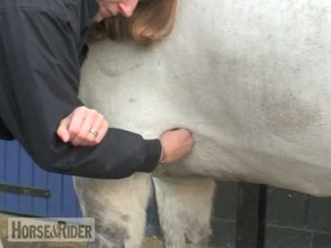 Taking Your Horse's Heart Rate   HorseandRider UK