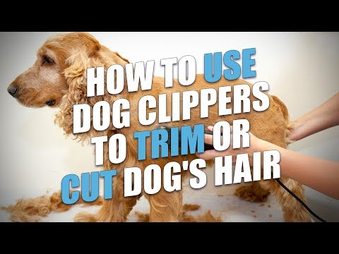 How to Use Dog Clippers to Trim or Cut Dog's Hair (A Quick Method)