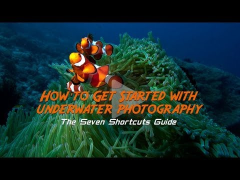 How to Get Started With Underwater Photography: Free Online Photography Lessons from Tommy Schultz