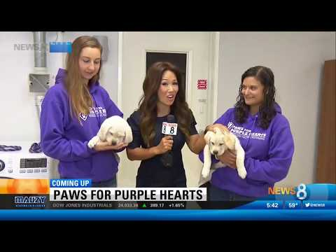 CBS 8 Teases the Grand Opening of Paws for Purple Hearts San Diego Facility