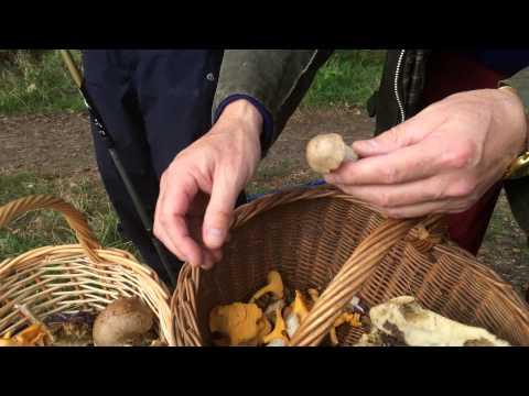 Mushrooms picking in Norfolk UK - Damian, James, Maciek 31.8.2014