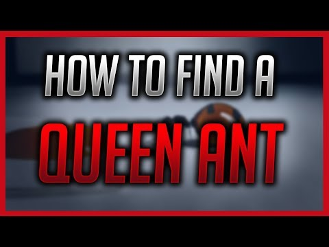 How to find a Queen Ant!