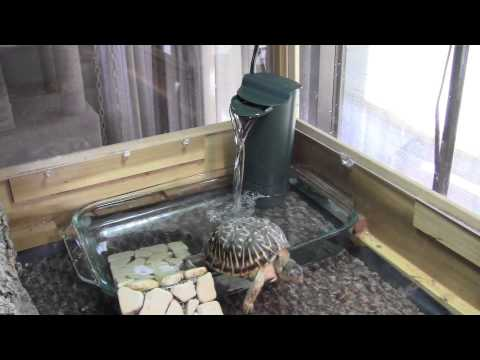 Box Turtles get new wading pool with filtration