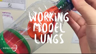 Lung Model with Science Alive!
