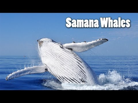 Samana Whale Watching from Punta Cana by Plane