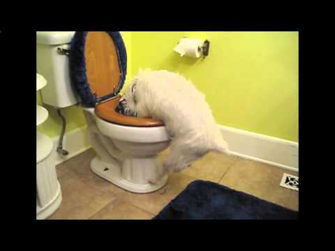 Puppy Flushed Down The Toilet By Four Year Old Boy - TOILET PUPPY