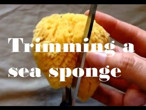 Trimming a Sea Sponge Tampon
