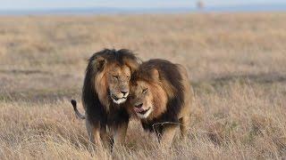 Maasai Mara Safari | Day 3