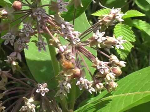 Pollination, Plants and Insects