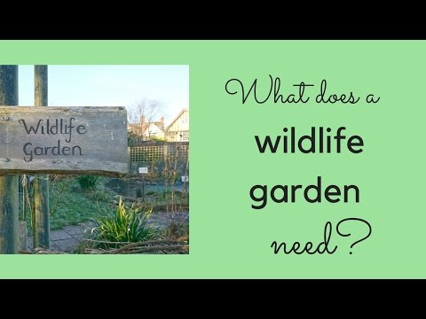 What does a wildlife garden need?