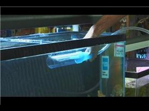 Saltwater Fish Tanks : How to Take Care of a Saltwater Fish Tank
