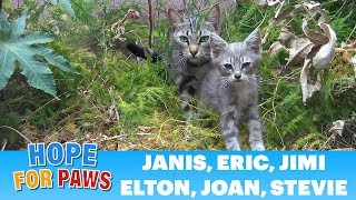 Sick homeless family of kittens is rescued from life on the streets.