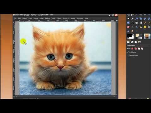 Gimp/Photoshop-Cut out an image with free select tool/lasso tool (of furry cute kitten)