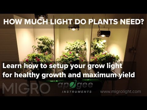 How Much Light Do My Plants Need?   Timelapse Grow And Yield Results