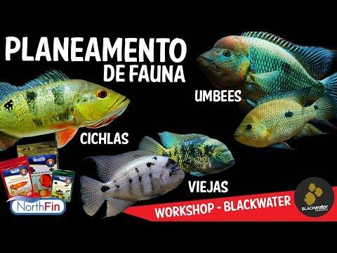 Planeamento para a FAUNA - Workshop Blackwater