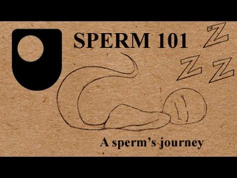 SPERM 101: What's A Sperm's Journey Like?  (2/3)