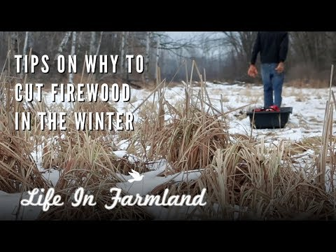 The Positive Side of Winter Homesteading:  A 4 Channel Collaboration