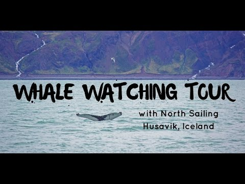 Whale Watching Tour in Husavik Iceland with North Sailing