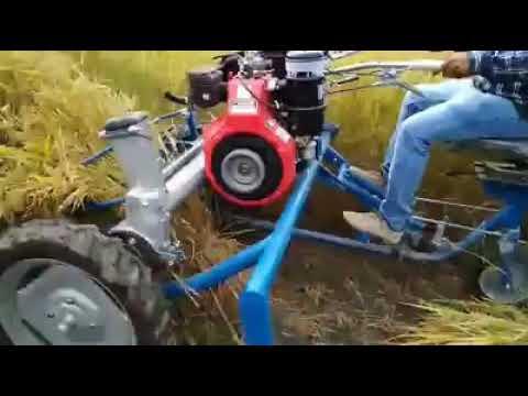 Rice cutting machine..automatic