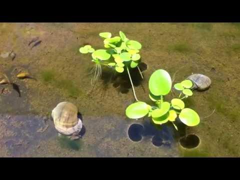Algae Control in my Aquaponic System