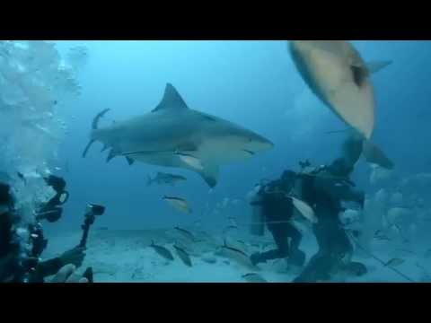 Diving with Bull Sharks in Playa del Carmen, Mexico
