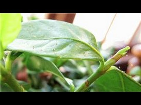 Indoor Gardening Tips : How Do I Kill Little Bugs on House Plants?