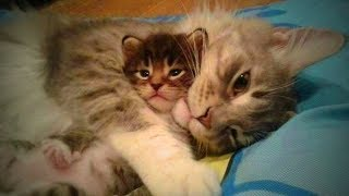 Cats and Kittens 😻🐱 Funny Cats and Kittens Together (Part 2) [Funny Pets]