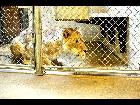 Zoo Keepers - Career Spotlight