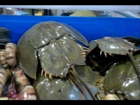 Pattaya Fresh Seafood Market (Naklua Beach)