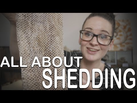 ALL ABOUT SHEDDING (everything you need to know)