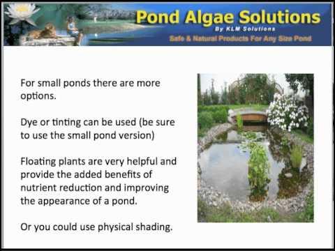 Pond Shading Options - Limiting Green Water Algae