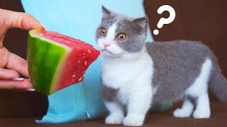 Will Cats Eat Giant Watermelon?