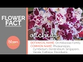 Download Orchids - A Florist's Guide MP3,3GP,MP4