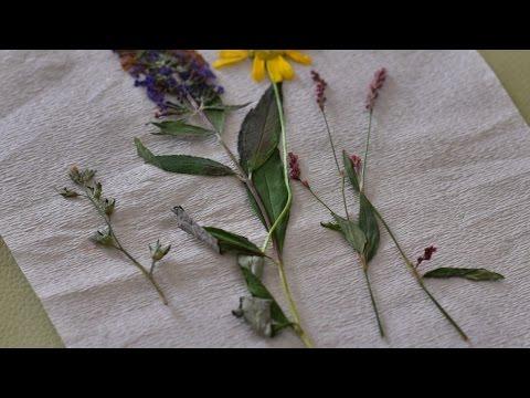 Make Easy Microwave Pressed Flowers - DIY Home - Guidecentral