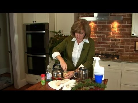 Dish Detergent Insect Spray for Indoor Houseplants : Dealing with Bugs & Pests