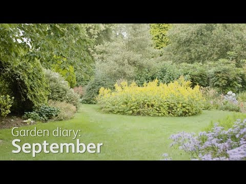 Garden Diary - September: Repair and maintain your lawn