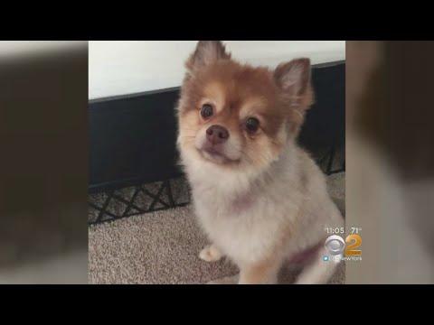Dog Dies During Delta Flight