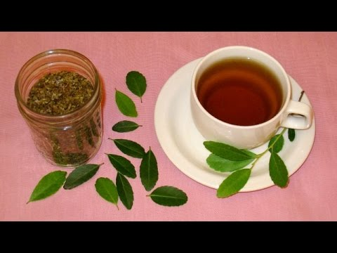 How to Make Tea from Scratch: Harvest Leaves, Roast and Brew Tea at Home