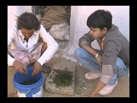 Pastricide preparation by Datura leaves Hindi Access Madhyapradesh