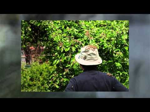 Mission Viejo, California Bee Removal - How to Get Rid of Bees Naturally