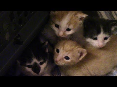 Kitten, Garden, and More Cats Update