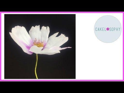 Cosmos Flower in Cold Porcelain or Gumpaste