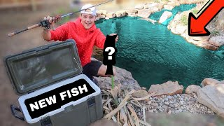 CATCHING NEW PET FISHES for BACKYARD POND!!