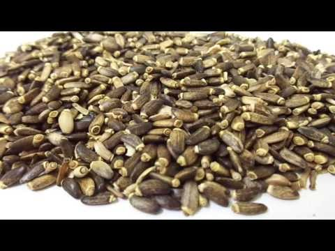 Milk Thistle Seeds (Silybum marianum)  [Supplier & Exporter] Seeds, Oil & Extract