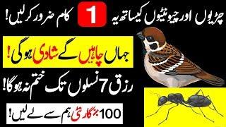 Do this with birds and ants to get rich   Jald Shadi or Dolat Mand Hony Ka Amal    Rishta Wazifa