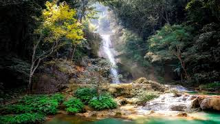 1 Hour Amazon Rainforest Music | Ambient Instrumental Tropical Music