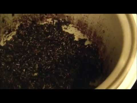 Black Sweet Rice:  Using A Rice Cooker
