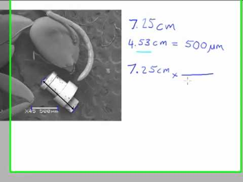 Calculating the Size of a Feature in a Micrograph